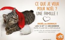 Noël des animaux: quatre-cents chiens et chats à la recherche d'un maître