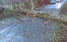Arbres et câbles électriques arrachés, camion renversé... La tempête Eleanor est passée (aussi) par l'Eure