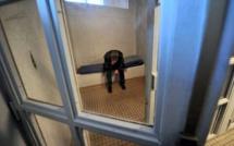 Evreux (Eure) : contrôlé avec de la drogue, il était recherché pour exécuter une peine de prison