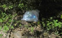 Eure : il se débarrasse d'un sac d'immondices dans un bois, le « pollueur » encourt jusqu'à 750€ d'amende