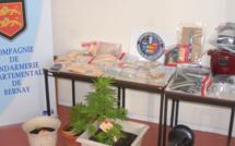 Un trafic de drogue très actif anéanti par les gendarmes de Bernay : 14 suspects interpellés dans l'Eure