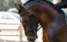 Deauville fête le cheval le 30 septembre : découvrez le programme des animations