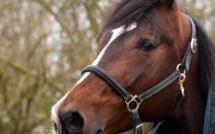 Yvelines : une adolescente de 16 ans blessée grièvement au visage par un cheval aux Loges-en-Josas