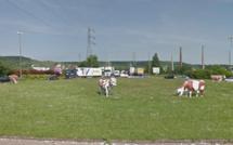 Vaches vandalisées : le maire de Saint-Etienne-du-Rouvray va déposer plainte