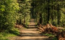 Le cadavre d'un Dieppois de 48 ans découvert en forêt d'Arques-la-Bataille