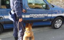 Eure : un réseau de drogue démantelé au Neubourg après deux ans d'investigations