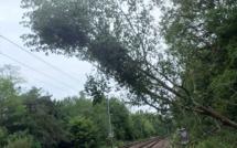 Trains supprimés et en retard entre Paris - Caen - Cherbourg : un train a heurté un arbre près d'Évreux