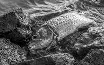 Eure : la pêche interdite en Seine à cause d'une pollution industrielle dans les Yvelines
