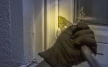 Yvelines : mis en fuite par sa victime, le cambrioleur est arrêté dans une voiture avec son butin