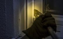 Un cambrioleur maintenu sur les lieux par un témoin jusqu'à l'arrivée de la police, à Sotteville-lès-Rouen