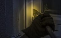 Yvelines : trois cambrioleurs stoppés dans leur élan par des policiers à Mantes-la-Ville