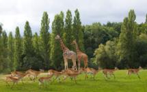 Les animaux du ZooSafari de Thoiry s'invitent sur vos téléphones pendant le confinement