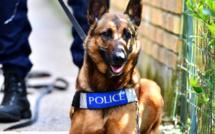 Yvelines : le braqueur (âgé de 15 ans) est retrouvé par le chien pisteur de la police à Plaisir