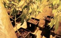 Il cultivait de l'herbe de cannabis : la Police débarque chez lui, à Rouen