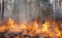 Violent feu de forêt en Seine-Maritime : 10 hectares brûlés et 50 autres menacés