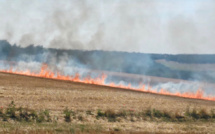 Seine-Maritime : 3 300 m2 d'espaces naturels ravagés par le feu à Pourville et Sommery