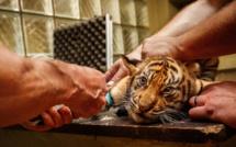 Seine-Maritime : neuf suspects entendus par la police à Rouen et au Havre pour trafic d'espèces protégées