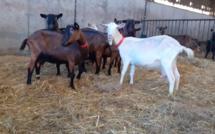 Le ministre de l'Agriculture en visite à la chèvrerie d'Élise près de Pacy-sur-Eure ce vendredi