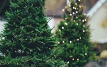 Le Havre recycle les sapins de Noël : 37 points de collecte mis en place dans toute la ville