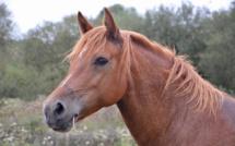 Eure : les sapeurs-pompiers au secours d'un cheval en difficulté dans un champ marécageux