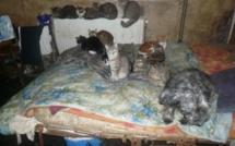 Vernon : le SOS d'une amie des chats entendu par la Fondation 30 Millions d'amis