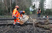 Yvelines : un arbre s'abat sur les voies à Villennes-sur-Seine, le trafic des trains interrompu
