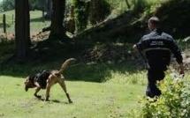 Hélicoptère et chien pisteur à la recherche d'un disparu en Seine-Maritime