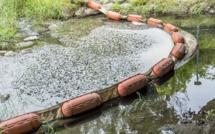 Seine-Maritime : la rivière la Lézarde polluée par une nappe d'hydrocarbure à Montivilliers