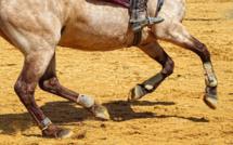 Seine-Maritime : un cavalier blessé grièvement lors d'une chute de cheval à Montivilliers