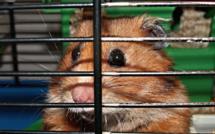 Rouen : ils s'affrontent à coups de brique et de couteau au sujet d'un hamster en cage