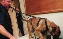 Val-de-Reuil : Près d'un demi kilo de cocaïne découvert par le chien anti-drogue