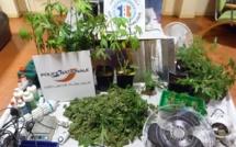 Il cultivait des plants de cannabis dans son sous-sol pour sa consommation personnelle