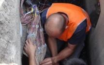 Les habitants de Saint-Saire privés de téléphone et d'Internet à cause d'un voleur de câble