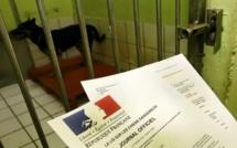 Rouen : le chien du SDF aimait les mollets des policiers... Le maître est en garde à vue, l'animal en fourrière