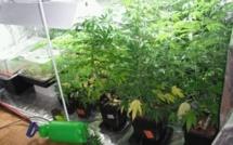 Eure : l'huissier venait exécuter une expulsion, il découvre une plantation de cannabis dans l'appartement