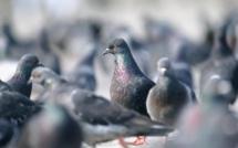 Elbeuf : ils s'amusaient à tirer à la carabine sur des pigeons et touchent deux passants