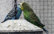 Rouen : qui en veut aux oiseaux du Jardin des plantes, aspergés de poudre d'extincteur ?
