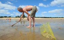 Seine-Maritime : le ramassage des coquillages interdit entre le cap d'Antifer et Veulettes
