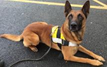 Le jeune homme avait laissé une lettre d'adieu : il est sauvé grâce au flair de Geko, un chien policier